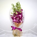Fascinatia orhideelor