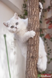 candice-dragota-pisici10