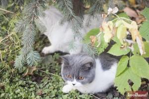 candice-dragota-pisici12