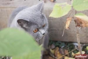 candice-dragota-pisici14