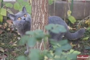 candice-dragota-pisici16