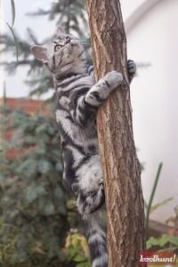 candice-dragota-pisici17