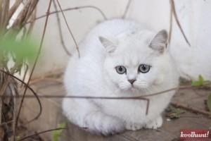 candice-dragota-pisici20