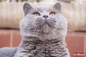 candice-dragota-pisici21
