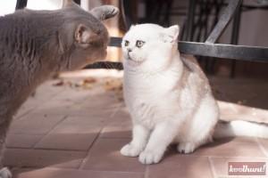 candice-dragota-pisici22