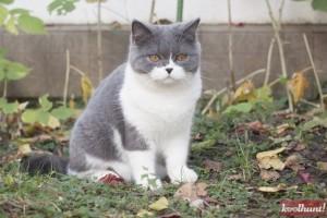 candice-dragota-pisici23