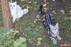 candice-dragota-pisici25