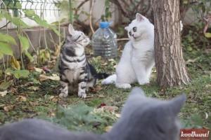 candice-dragota-pisici26