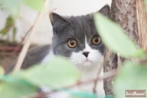 candice-dragota-pisici6