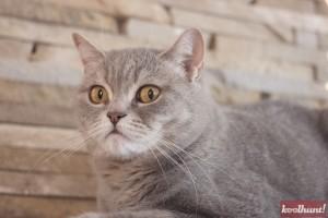 candice-dragota-pisici7