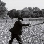 The White Ribbon – cate nenorociri se pot intampla intr-un singur film?