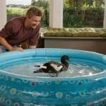 Love Birds – A little Kiwi delight