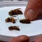 Afla totul despre insectele ucigase